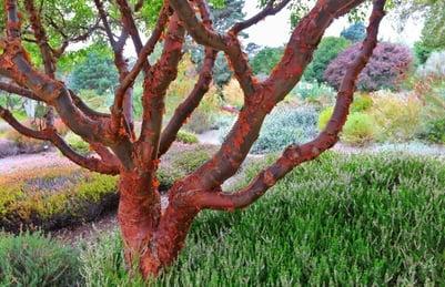 f:id:GardenPorter:20170310165453j:plain