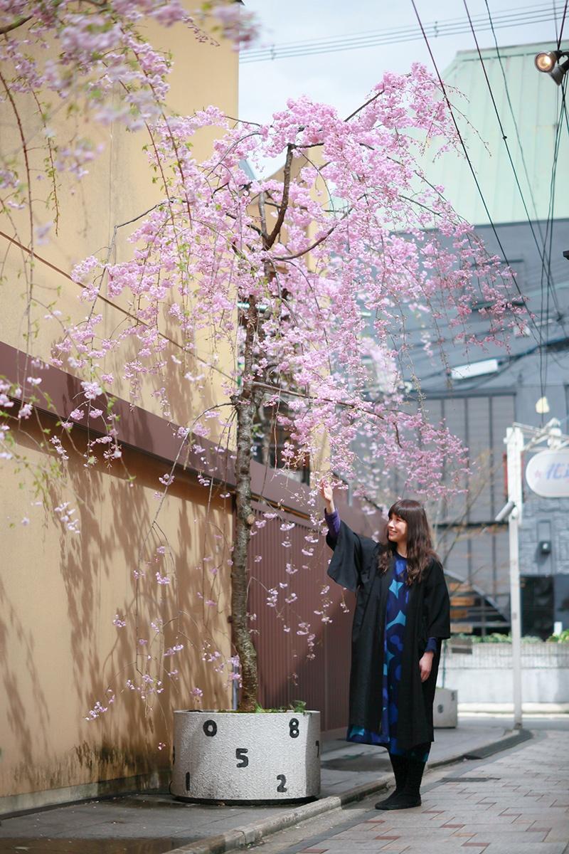 SOU・SOU枝垂桜