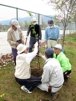 oogi-sakura_200904183.jpg
