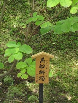 tenryuji_20090603_3.jpg