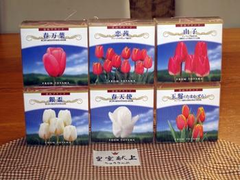 tulip_20091202.jpg