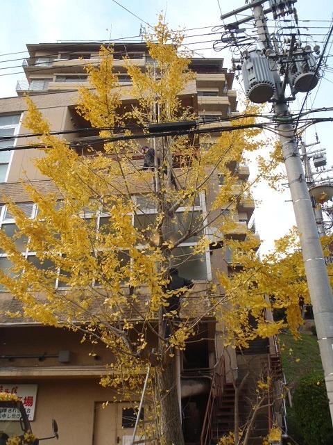 y_20121122-2.jpg