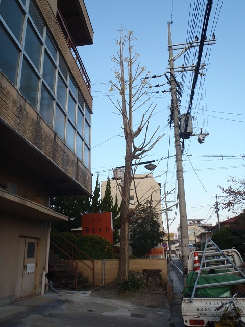 y_20121122-3.jpg
