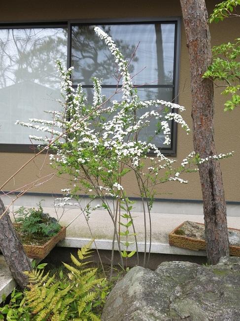 yukiyanagi_20130330.jpg