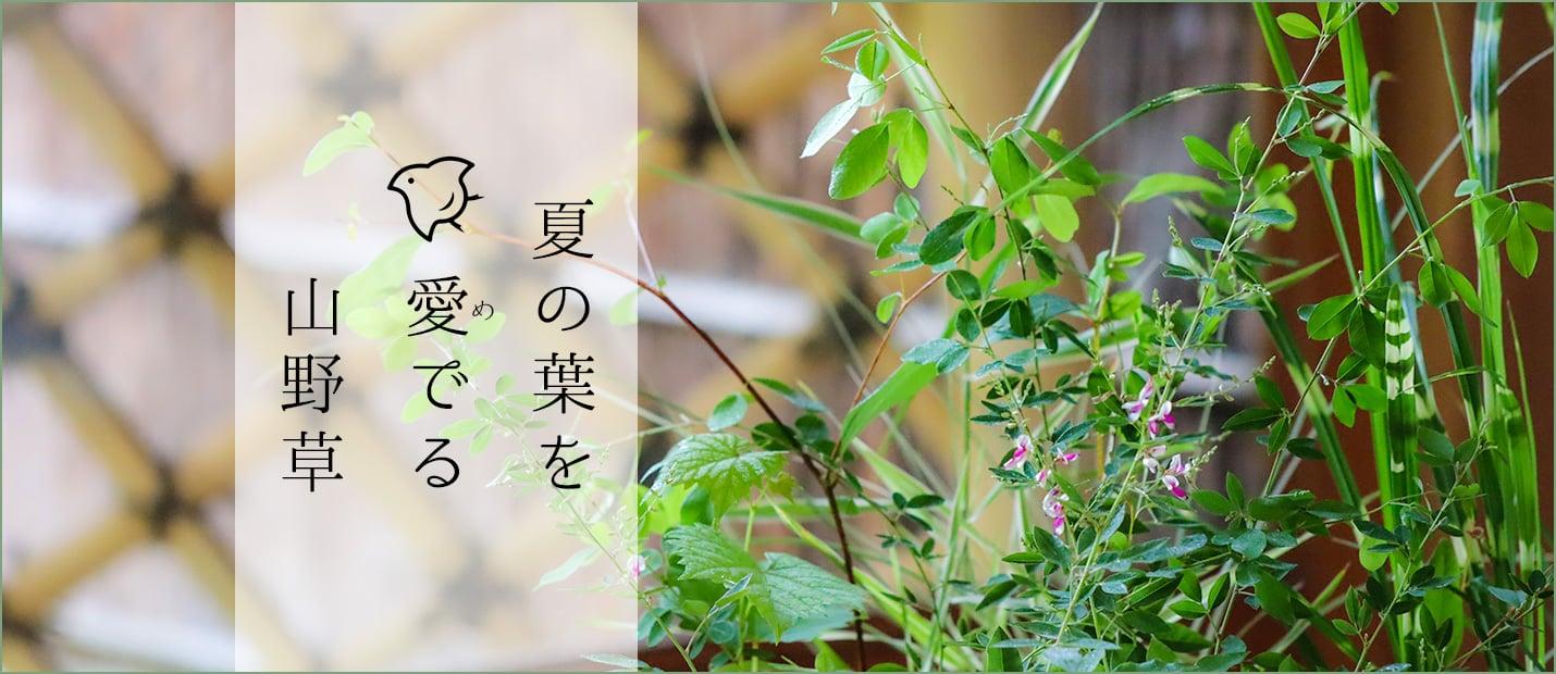 夏 山野草 葉