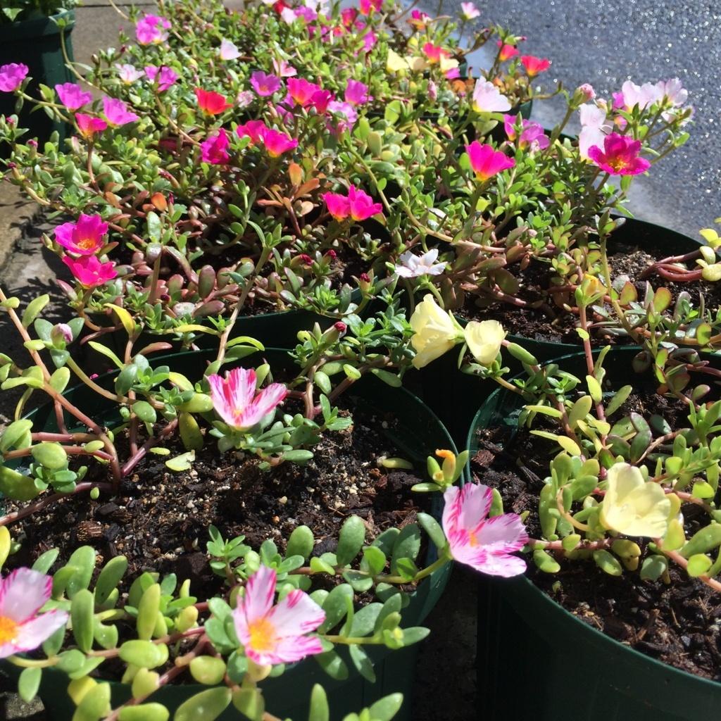 f:id:GardenPorter:20150807101833j:plain