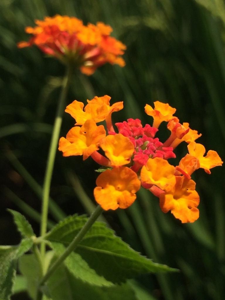 f:id:GardenPorter:20150809215516j:plain