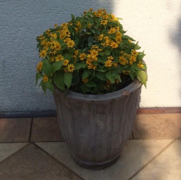 f:id:GardenPorter:20150812201348j:plain
