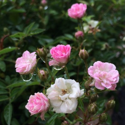 f:id:GardenPorter:20150822204616j:plain