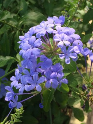 f:id:GardenPorter:20150823233930j:plain