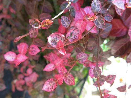 f:id:GardenPorter:20151026101940j:plain