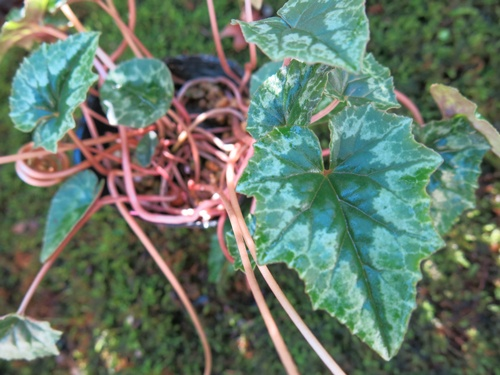 f:id:GardenPorter:20151105085352j:plain