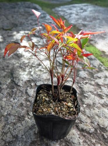 f:id:GardenPorter:20151210093305j:plain