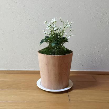 f:id:GardenPorter:20171012075506j:plain