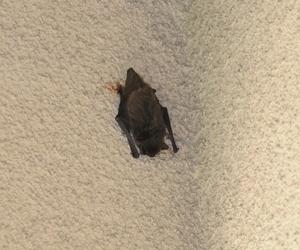 bat_20080606.jpg