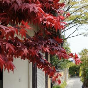 nomura_20080428.jpg